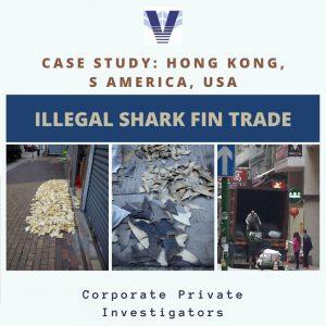 Trade of shark fin in Hong Kong